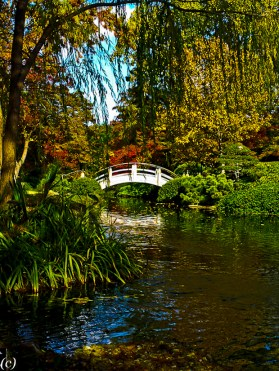 Lee Ann Torrans Texas Japanese Gardening