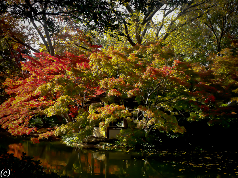Dallas Landscaping Japanese Maples Lee Ann Torrans