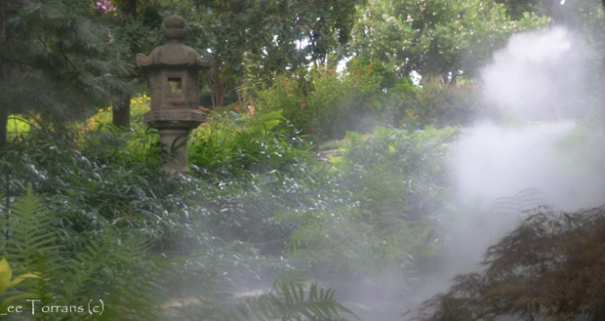 Fern Garden Dallas Arboretum