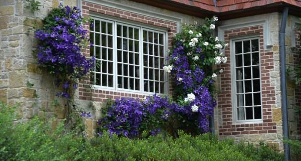 Texas perennial garden top ten summer perennials lee ann torrans jackman clematis texas perennial mightylinksfo