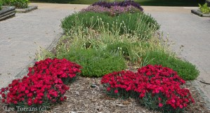 Dianthus and Society Garlic