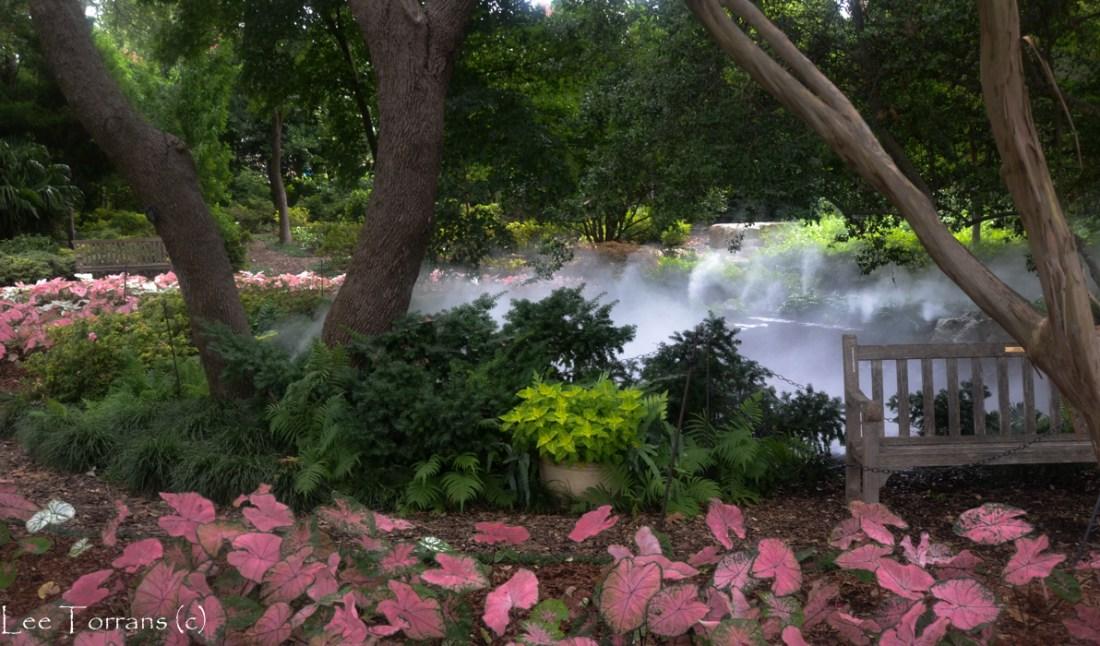 Fern-garden_Arboretum_Lee_Ann_Torrans