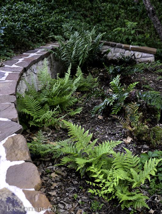 Highland Park Fern Garden.