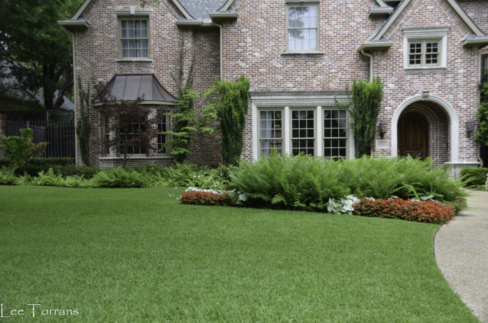 Ferns in Dallas Landscaping