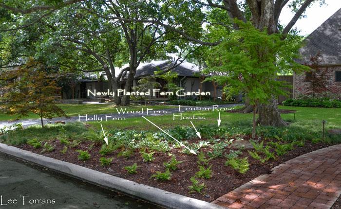 Newly Planted Fern Garden