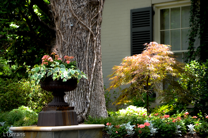 Get ready for summer with hanging baskets on tree limbs.