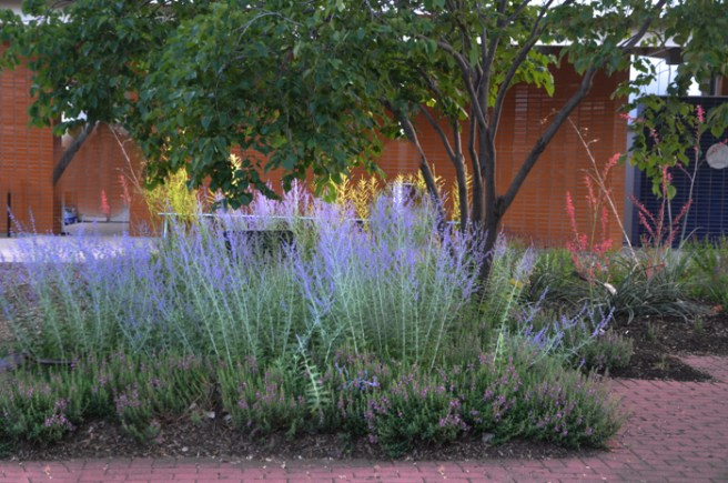 June Blooming Perennials in Texas