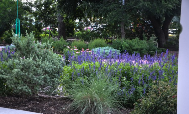 Texas June Perennials in Bloom