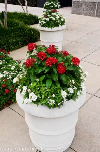 Flower Pot Ideas for Texas Lee Ann Torrans Dallas Landscape