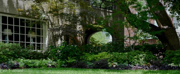 Purple Shamrock with Holly Fern in Perennial Shade Garden Setting.