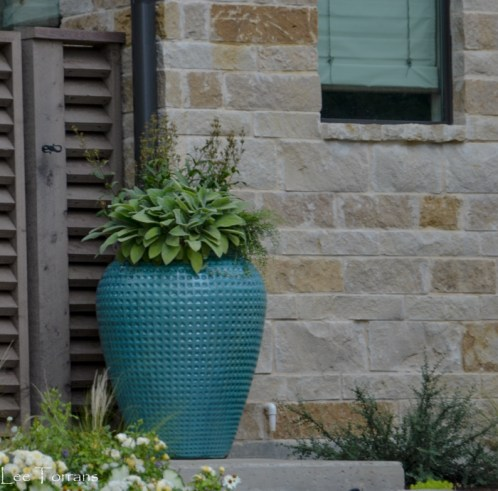 Lambs Ear Containter Gardening