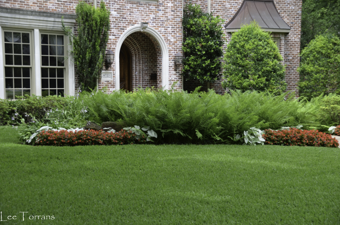 Ferns in Texas Landscaping