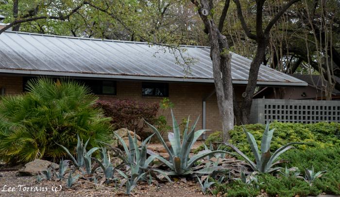 Texas Native Plants Agave