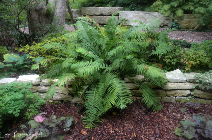 Image result for beautiful fern gardens