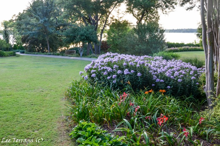 Purple / Lavender Summer Phlox in Dallas Landscaping does well in Texas. Blooms June to August.