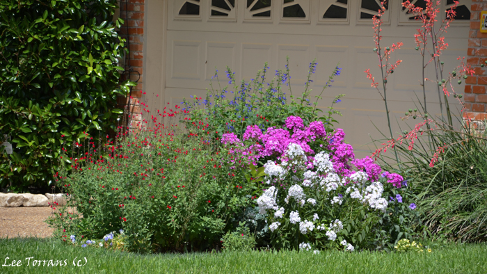 Pocket perennial gardens will work anywhere. Phlox, Salvia Greggii and Blue Salvia.