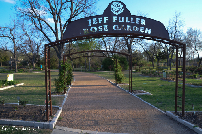 Jeff Fuller Rose Garden Farmers Branch