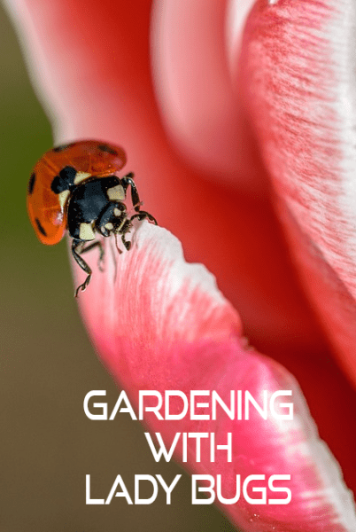Gardening with Lady Bugs