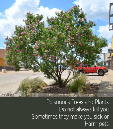 Poisonous Trees and Plants in Texas