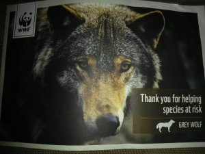 Christmas Present sponsoring the Grey Wolf species at risk.
