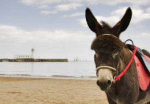 The average price of a Donkey ride in Scarborough has inflated by 421% since 2006, well above the average inflation rate for British tourist attractions, of 172% in the same decade.