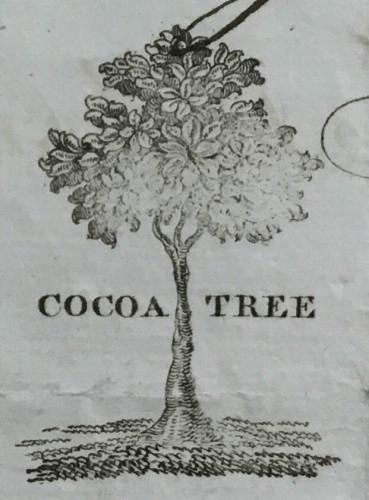 Cocoa Tree Logo