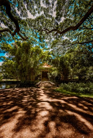 moanalua gardens artwork fine art photography hawaii