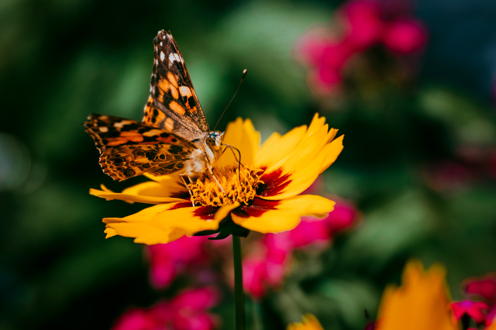 butterfly macro fine art botanical garden photography