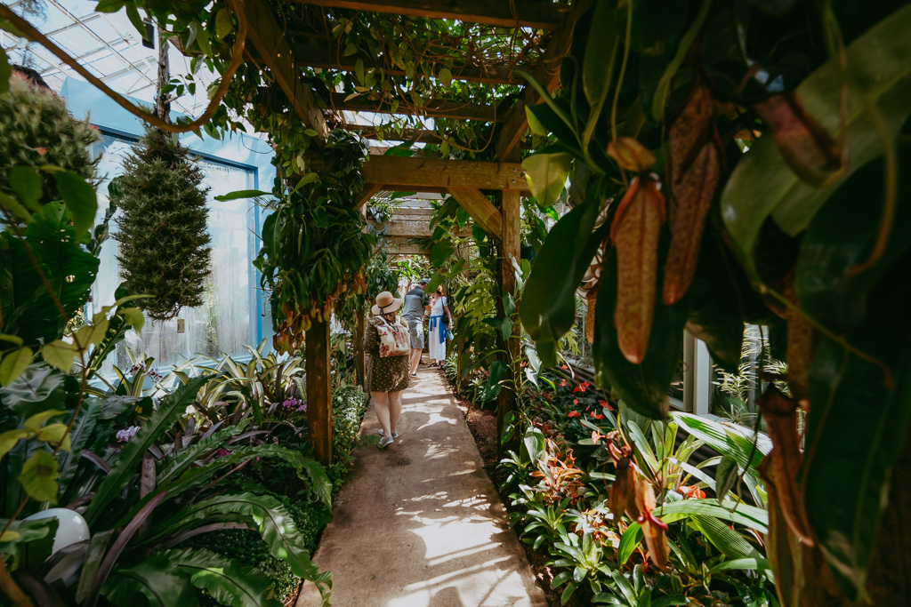marie selby botanical garden photography