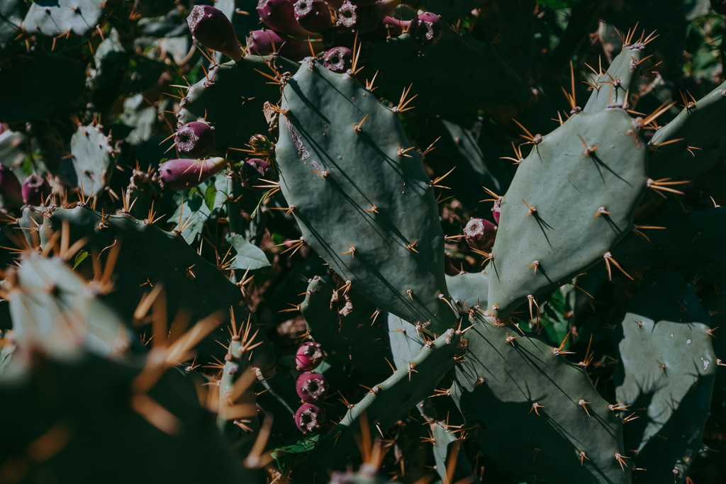 cactus fine art photography botanical garden