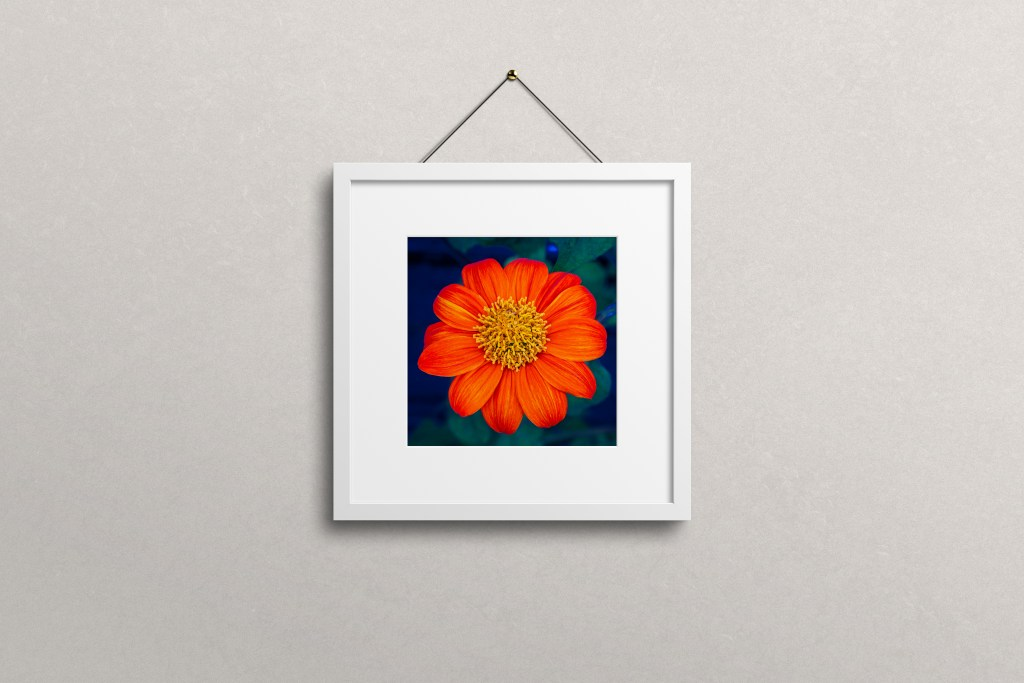 flower art photography print on interior wall