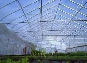 black-star-farms-hoop-house