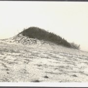 The Bear of the Sleeping Bear Dunes