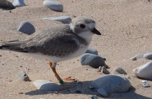 Birding Season in Northern Michigan