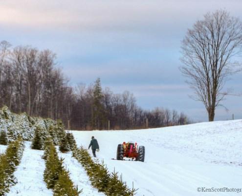 Harvesting (Christmas) Joy