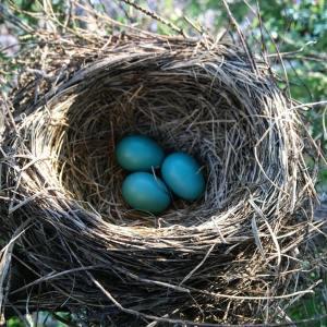 Leelanau Blues: Robin's Nest Edition