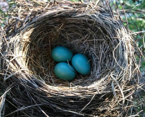 Leelanau Blues: Robin's Nest Edition