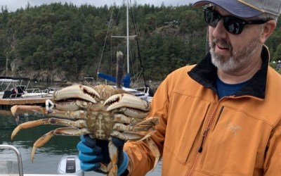 Big Dungeness Crab from the Salish Sea