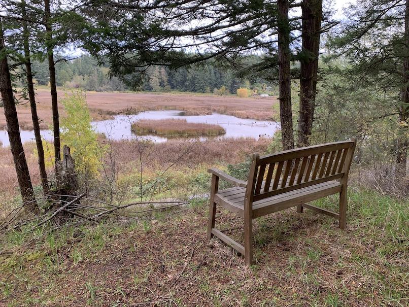 bench overlooking wetland