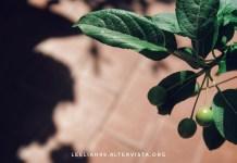 Piccolo melo sul terrazzo © leeliah99.altervista.org