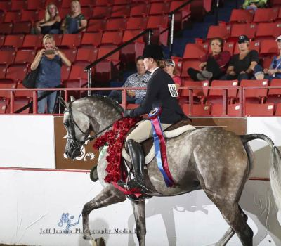 2018 Canadian National Champion in the PB Hunter Pleasure Jr. Horse and AATR 19-39. As well as Top Ten (3rd) in the AAOTR 18-39