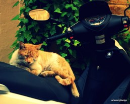 cat sleeping on a motor scooter.