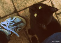 black kitten sitting beside my foot and staring up at me.