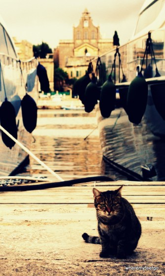 a cat crouching near a marina where yachts are tied up.