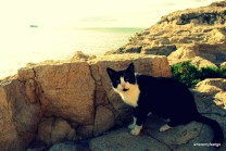 Black and white cat sitting on a rock looking into the camera.