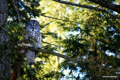 """""""what?"""" he said. I was dumbfounded. """"I thought owls only say 'who'?"""" I replied. (Green's Creek, Ottawa)"""