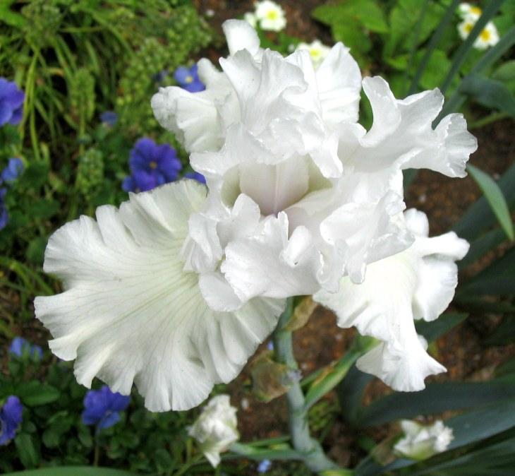 whitelaceyes