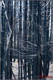 Aftermath of a Forest Fire