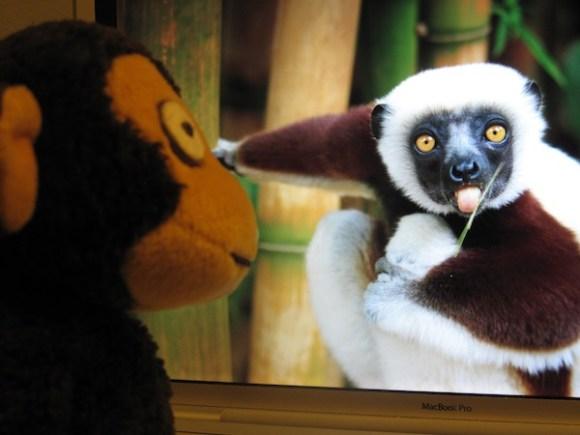 2_monkey