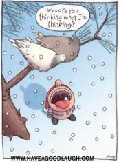 Winter_Humor_2012_116